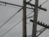 Old broken pole lashed to new pole
