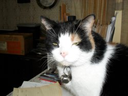 Patchy Patches....My favorate friend at home