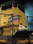 Highlight for Album: Cats...