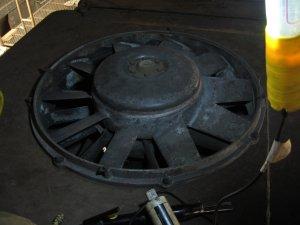 Needlechipped Fan